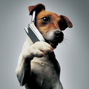 Dog-Answering-Mobile-Phone